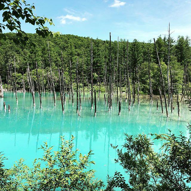 #青い池 は偶然生まれたそう